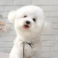 고양이케이프 핸드메이드 애견케이프 소녀레이스 케이프