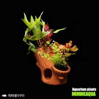 나무산란상 모듬수초(2가지)