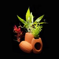고운물 삼방원통형 산란상 모듬수초 - (포트수초)