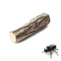 국산 곤충 놀이목 - (장수풍뎅이 사슴벌레 놀이목)