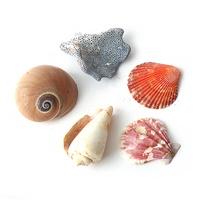 랜덤 조개소라 5개 - 조개껍질 소라장식품