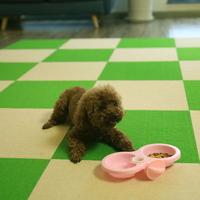 펫초이스 타일형 강아지 미끄럼방지 매트