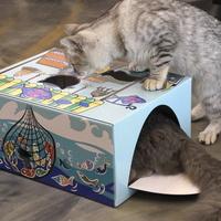 고양이 페이퍼 하우스 왔다수산