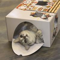 펫라이프 고양이 종이 페이퍼 하우스 갔다 치킨