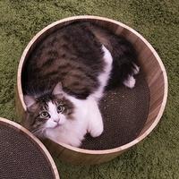 야오미 고양이 스크래쳐 라운드
