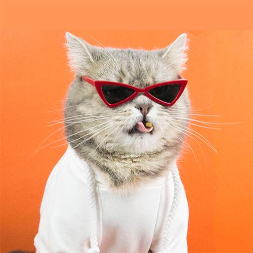 고양이선글라스 이온펫 트라이앵글 냥글라스