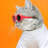 이온펫 고양이 냥글라스 선글라스