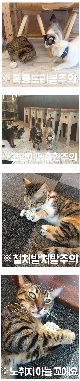 금방울 핵잼볼 고양이볼 2P - 모모제리, 4,000원, 장난감, 공