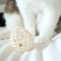 모모제리 고양이 방울 볼 장난감