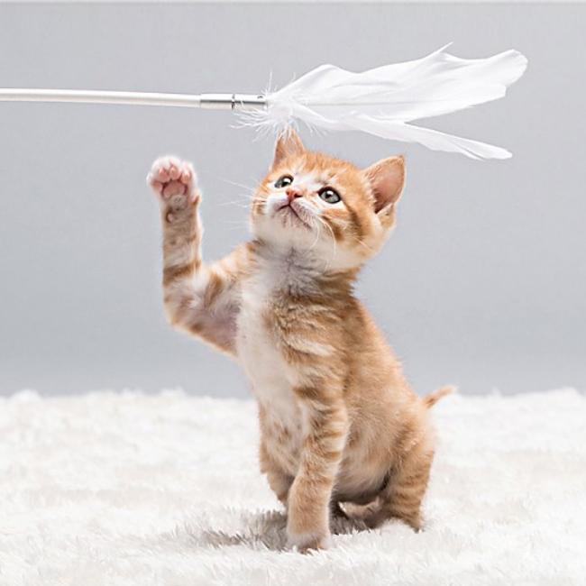 피단 고양이장난감 깃털 매직봉