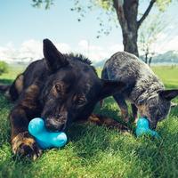 웨스트포우 턱스 L 튼튼한 강아지 장난감 노즈워크