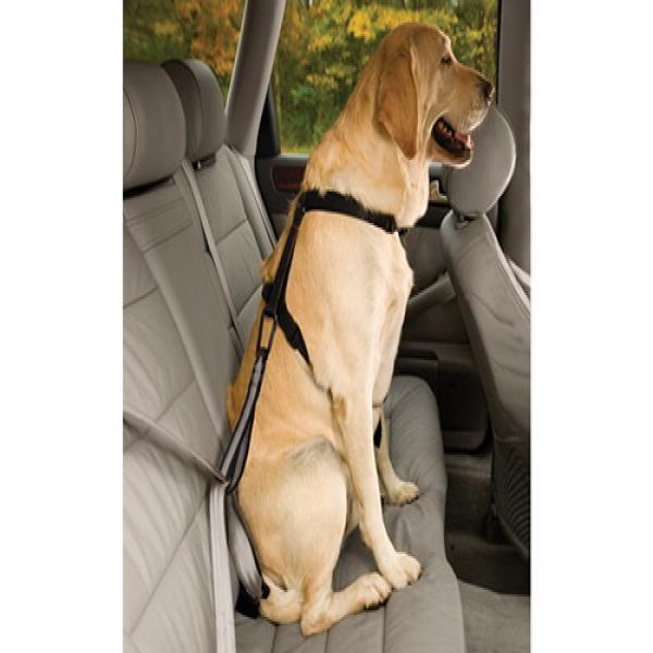 커고 자동차 강아지 안전벨트 비이클 테더 시트벨트