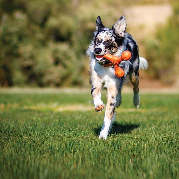 웨스트포우 터그놀이 강아지 장난감 스캠프 Large(22cm)