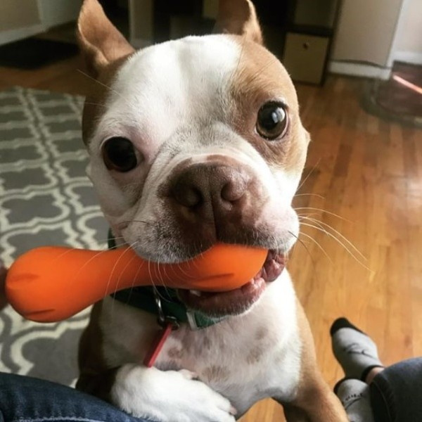 웨스트포우 헐리 강아지 장난감 조고프레스 XS