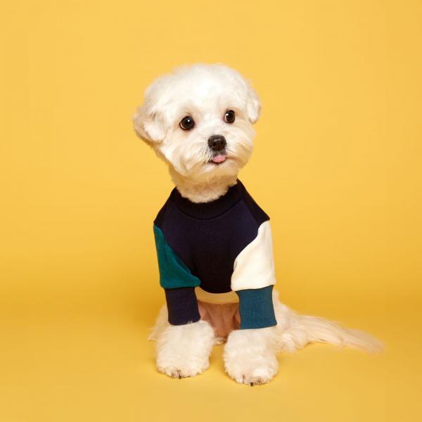 플로트 블록맨투맨 네이비아이보리 강아지티셔츠