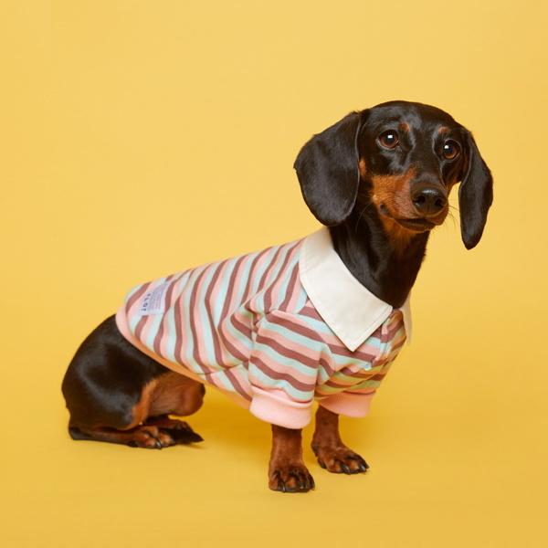 플로트 스트라이프 럭비 셔츠 핑크스카이 강아지옷
