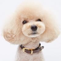초코 코피아 강아지 목줄 S