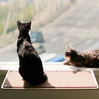 뽀떼_냥반600_캣타워 윈도우캣타워 창문 고양이