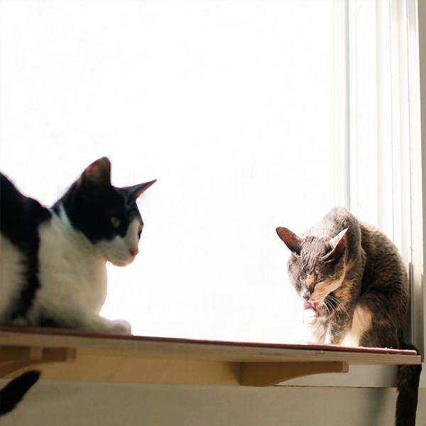 뽀떼_냥반700_캣타워 윈도우캣타워 창문 고양이