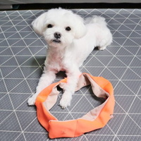 로맨스독 강아지 꽈배기 노즈워크 장난감