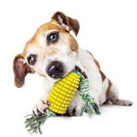 리스펫 강아지장난감 셀프칫솔 옥수터그
