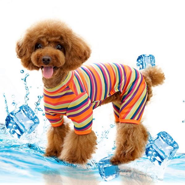 특수 항균 애견옷 비비드 올인원 강아지옷