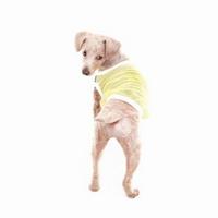 매쉬 컬러 블록 티셔츠 네이비 옐로우