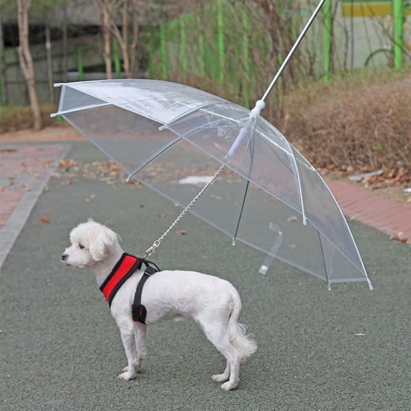 파스텔독 강아지 산책 우산 리드줄