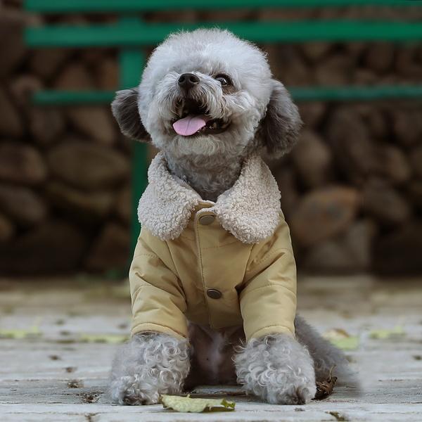 강아지 솜털 카라 솔리드 패딩