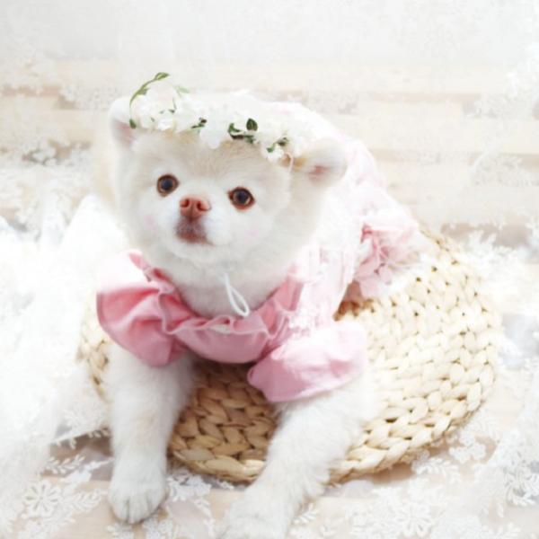 반려동물 벚꽃 화관