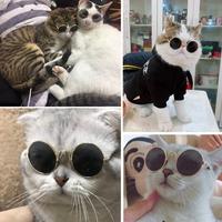 강아지 고양이 선글라스