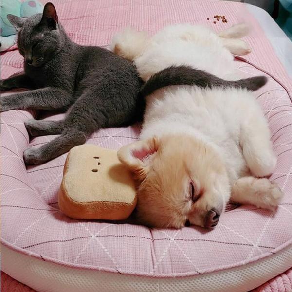 발라당 강아지 고양이 모달 방석 원형