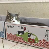 발라당 고양이 박스 스크래처 냥모나이트 스크레쳐