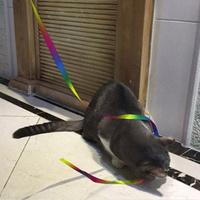 발라당 고양이 장난감 끈 리본 낚시대