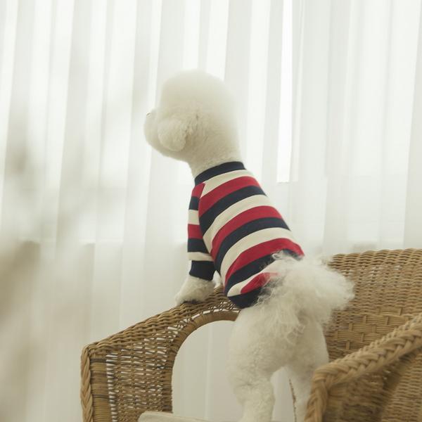 데일리 강아지 맨투맨 레드