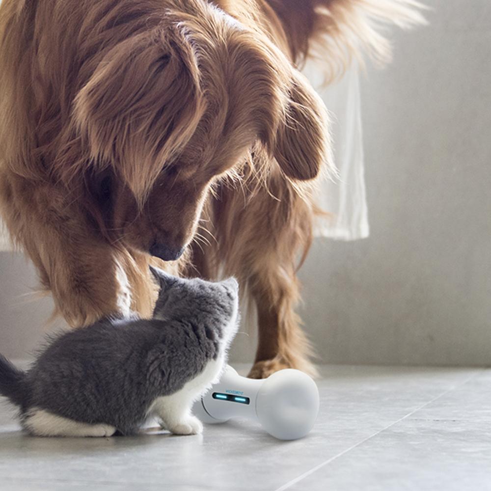 위키드본 반려동물 장난감