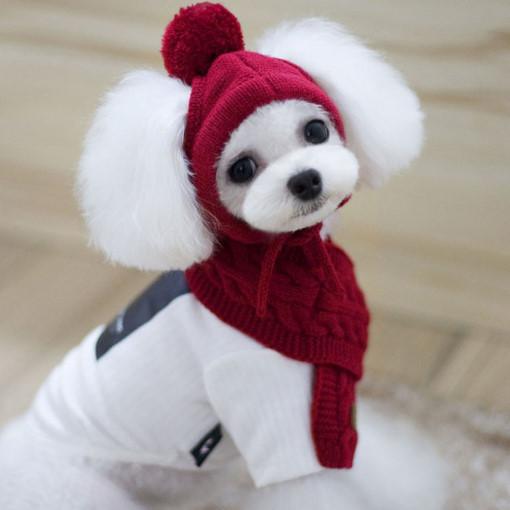 강아지옷 니트 목도리 모자 세트