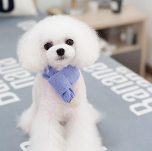강아지옷 비비드 컬러 니트목도리