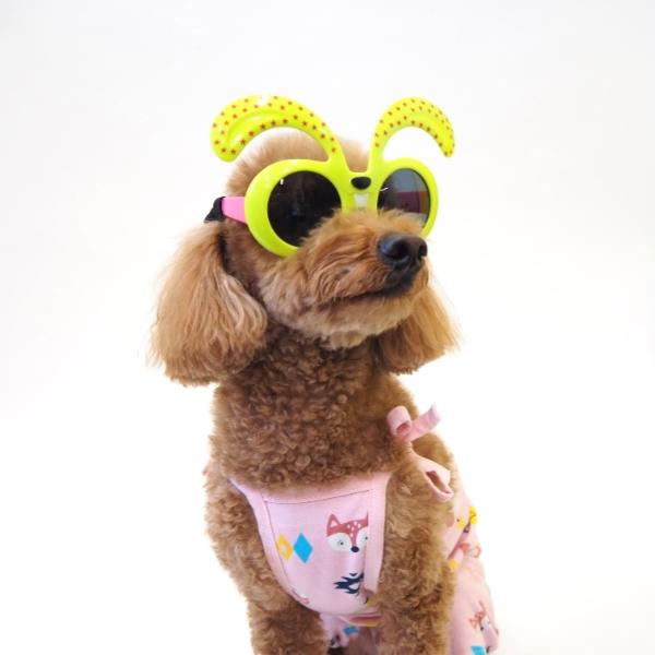 반려동물 파티용 선글라스