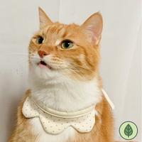 개달당 오가닉 왕관 턱받이 강아지턱받이 고양이턱받이