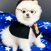 강아지 해리포터 코스튬 - 그리핀도르, 마법사 망토 강아지 핸드메이드 망토