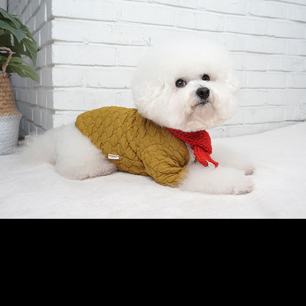 강아지아우터 강아지패딩 숏패딩 누빔자켓