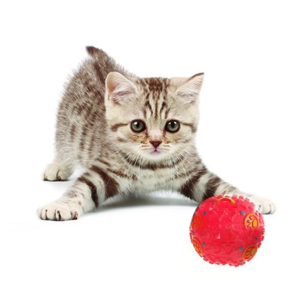 고양이 간식 볼 장난감