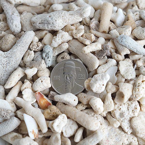 산호사 15~20mm 3kg (벌크포장)