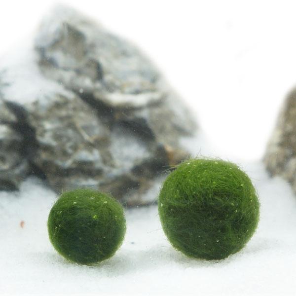 일본 미니 마리모 1~1.5cm (중) / 마리모키우기