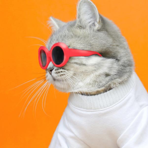 이온펫 고양이 냥글라스 선글라스 레드