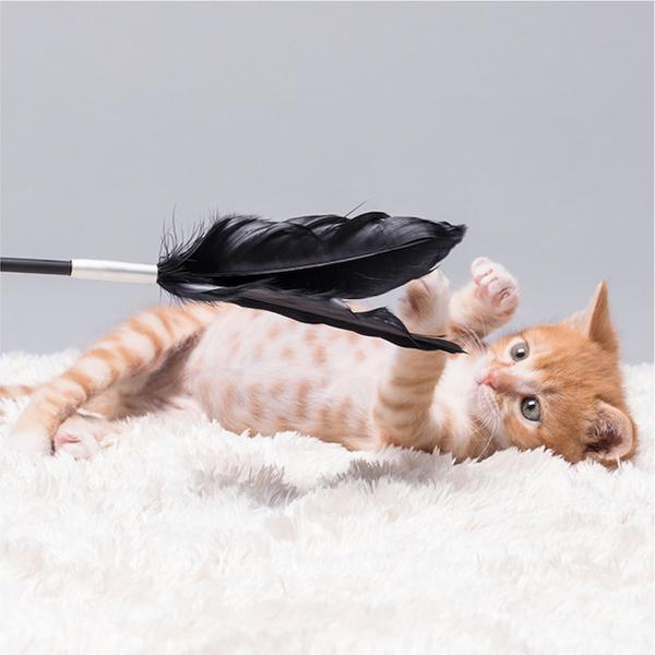 피단스튜디오 고양이 깃털매직봉 장난감