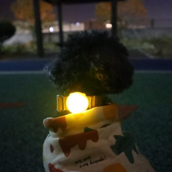 강아지 LED 블링커 목줄 장착형