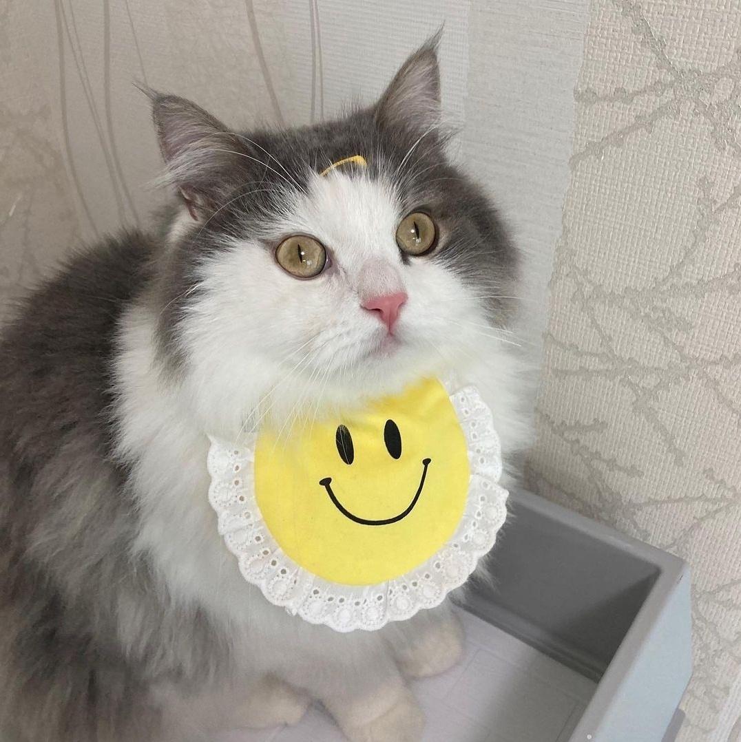 로맨스독 예쁜 강아지 스마일 스카프 고양이 케이프 턱받이 반다나