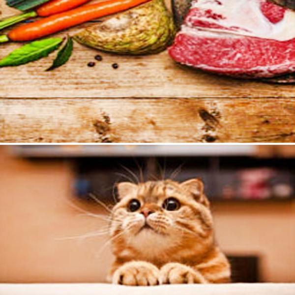캣츠랑 고양이 전연령 사료 5kg